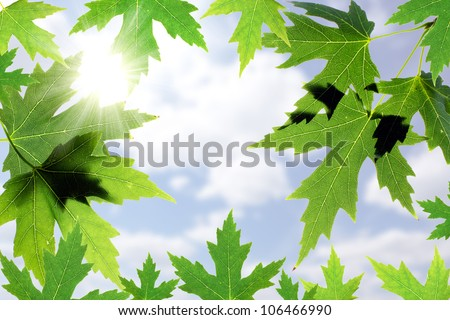 Beautiful maple leaves against the blue sky. Leaves frame - stock photo