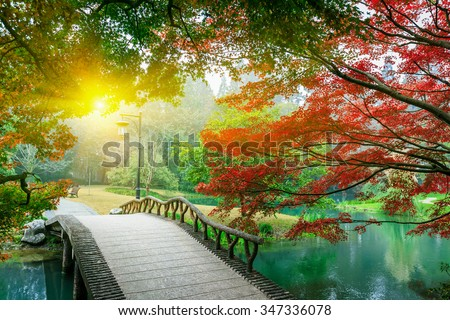 Beautiful maple leaves and Small bridge in Chinese garden during Fall season - stock photo