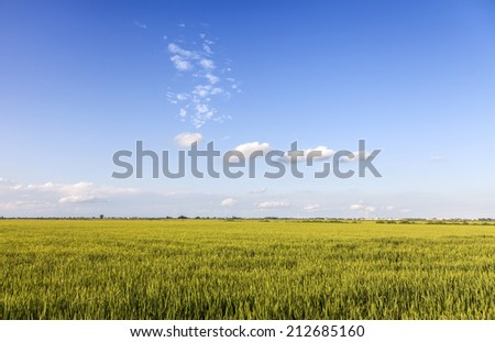 Beautiful meadow against the blue summer sky - stock photo