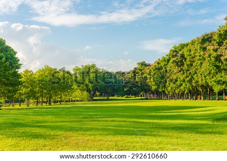 Beautiful meadow and tree in the park, Bangkok Thailand - stock photo