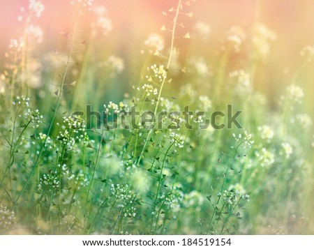 Beautiful meadow flowers - stock photo
