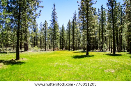 Beautiful meadow in Lassen National Volcanic Park
