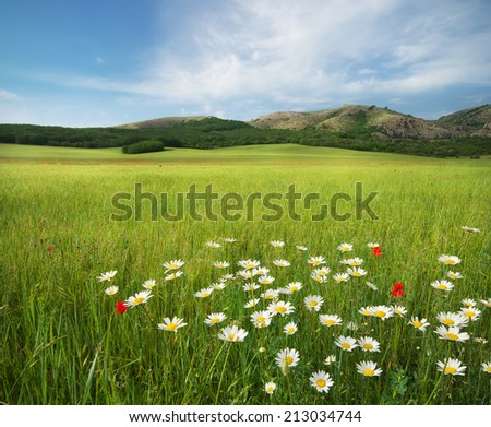 Beautiful meadow landscape. Composition of nature. - stock photo