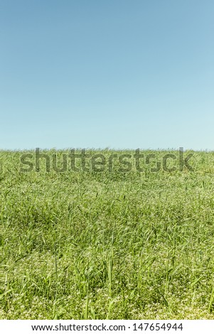 Beautiful meadow landscape on a clear summer day