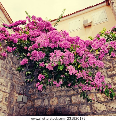 Beautiful Mediterranean village view with bougainvillea and stone wall, instagram effect, square toned image - stock photo