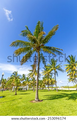 beautiful Miami Beach, popular travel destination, wide angle view with palm trees - stock photo