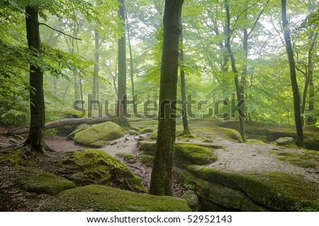 Beautiful mistly landscape and moss-covered rocks at Nelson's Ledges State Park, Newbury, Ohio, USA.