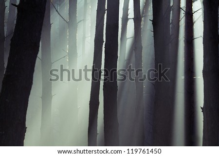 beautiful misty forest abstract background - stock photo
