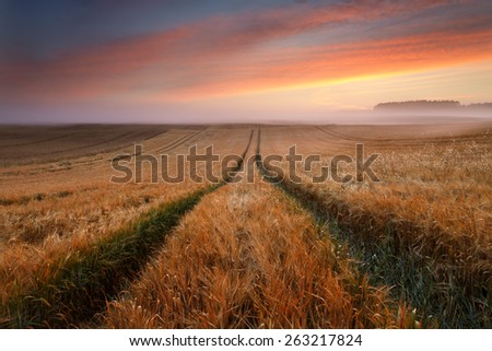 Beautiful Misty Sunrise Landscape Field in North Poland/ Morning Glory - stock photo
