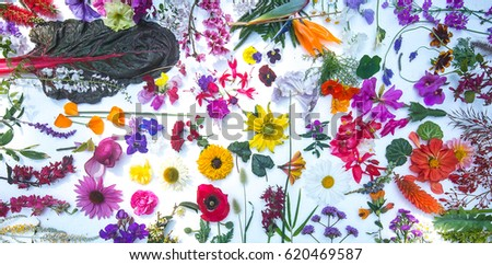 Beautiful mixed colorful flowers isolated white background.