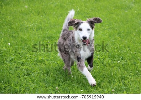 beautiful mixed dog is running in the garden