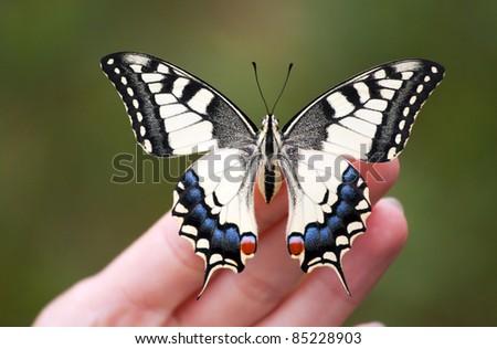 Beautiful monarch butterfly on human hand. - stock photo