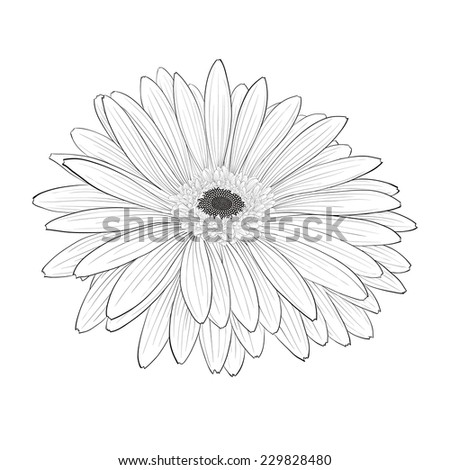 beautiful monochrome, black and white gerbera flower isolated. Hand-drawn contour lines and strokes. additional format in the profile of the artist - stock photo