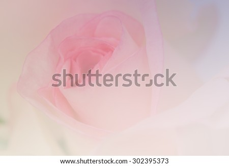 Beautiful moon stone rose in soft style for the background.