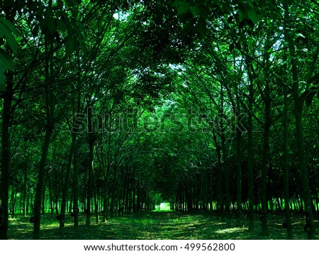 Beautiful morning green forest, Green forest, Green background.