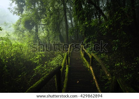 Beautiful morning green forest in mist - stock photo