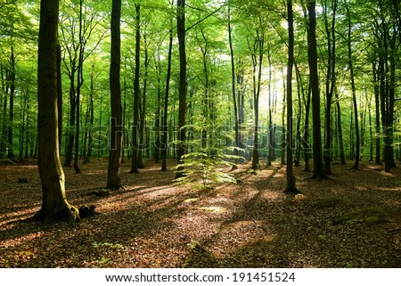Beautiful morning in the forest - Poland - stock photo