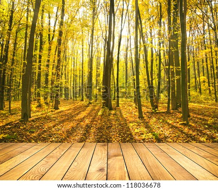 Beautiful morning in the misty autumn forest with sun rays with wooden palnks - stock photo