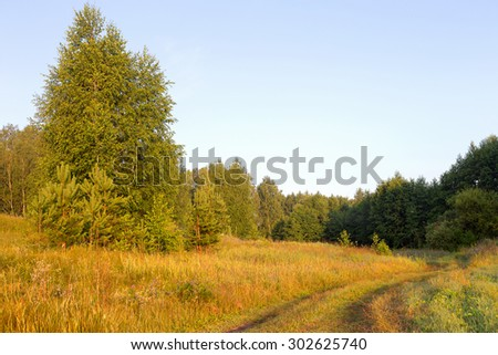 Beautiful morning landscape in the forest road, forest glade flooded with bright sunlight. - stock photo
