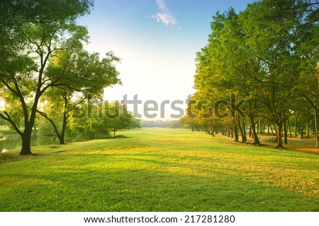 beautiful morning light in public park with green grass field  - stock photo