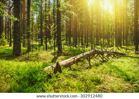 Beautiful morning scene in the forest with sun rays - stock photo