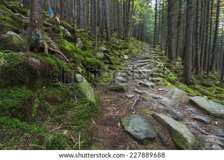 Beautiful mossy forest with a footpath  - stock photo