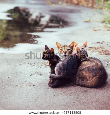 beautiful mother cat with kittens - stock photo