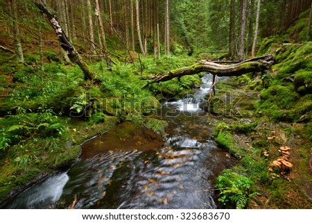 Beautiful mountain creek with pure water in a deep green forest valley - stock photo