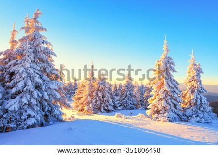 Beautiful mountain landscape opens from the green meadow covered with large and small trees under the snow in the winter New Year's Day. - stock photo