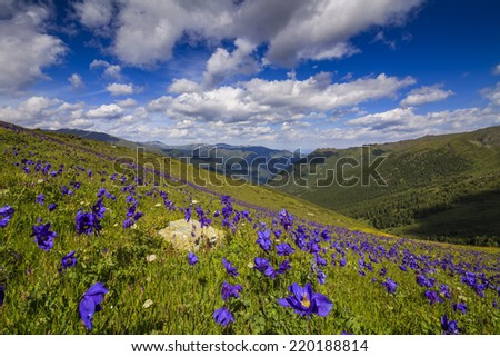 Beautiful mountain landscape with flowers and blue sky  - stock photo