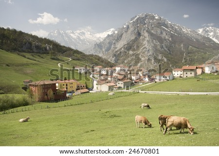 beautiful mountain scape with a green field and cows