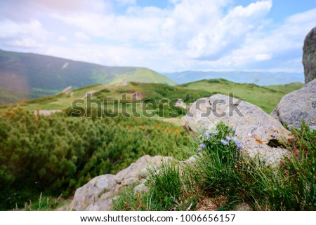 Beautiful mountains landscape with green meadow. Carpathians, Ukraine.