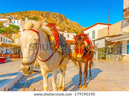 beautiful mules waiting for tourists in the port of Hydra island in Greece - stock photo