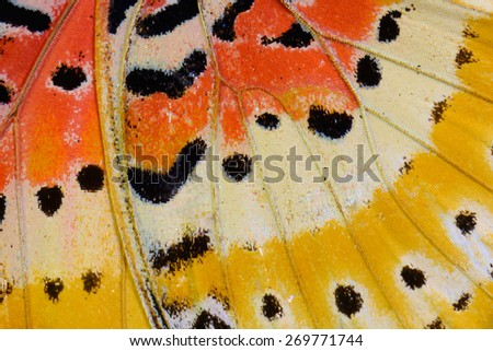 Beautiful multicolor pattern background texture made from Leopard Lacewing Butterfly (Cethosia cyane) - stock photo