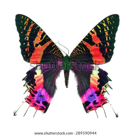 Beautiful multicolored butterfly, Sunset Moth, Urania ripheus (Madagascar) in fancy color profile, isolated on white background - stock photo