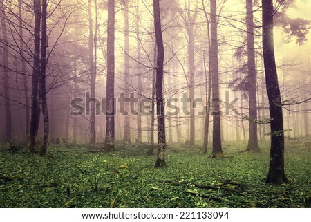 Beautiful mysterious color forest trees. - stock photo