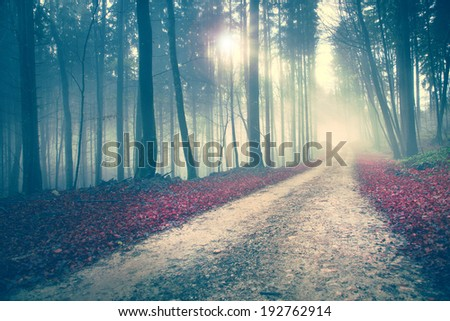 Beautiful mysterious color season forest with road. Vintage filter used. - stock photo