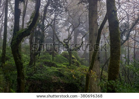 Beautiful / mystical / romantic / fairy forest / park / garden with spooky trees, mossy stones and lantern, during foggy day. - stock photo