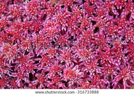 Beautiful natural background from a lichen in Siberia - stock photo