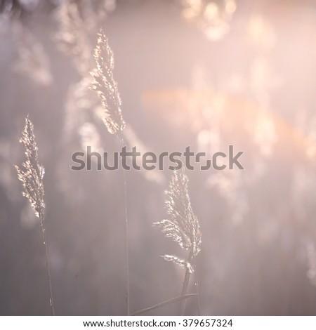 Beautiful natural background. Vintage photo. - stock photo