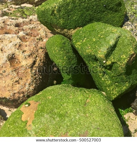 Beautiful Natural Rocks Covered in Moss