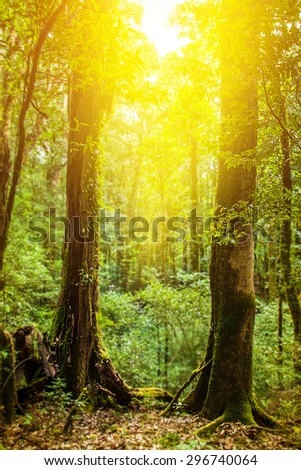 beautiful nature at morning in spring forest with sun rays. - stock photo