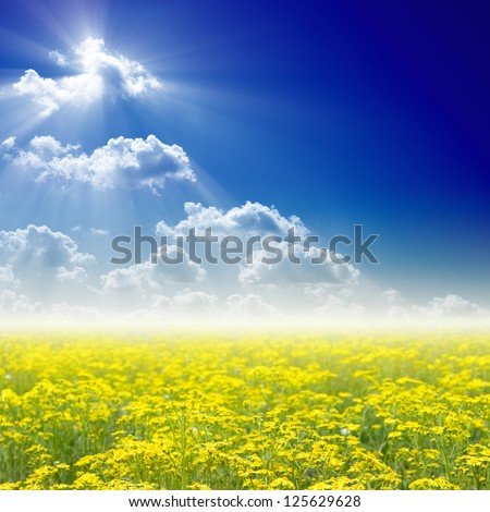 Beautiful nature background - blooming wildflowers field, bright sun in blue sky. - stock photo