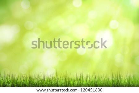 beautiful nature background with green grass and sunlight