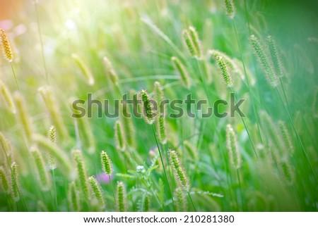 Beautiful nature - Beautiful field of grass - stock photo