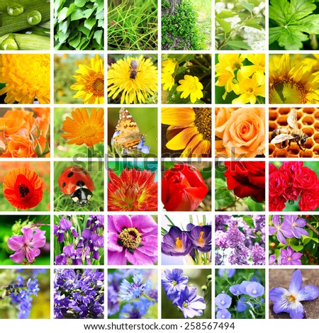 Beautiful nature collage - stock photo