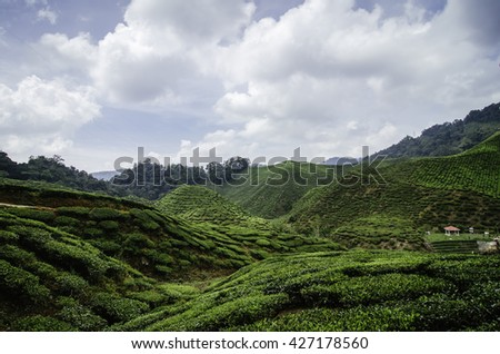 beautiful nature, green tea plantation landscape at cameron highland,malaysia. - stock photo