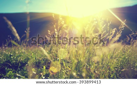 Beautiful nature landscape - Alpine meadow. Grass closeup with sunbeams. Beautiful Nature landscape with sun flare. Vintage Sepia toned