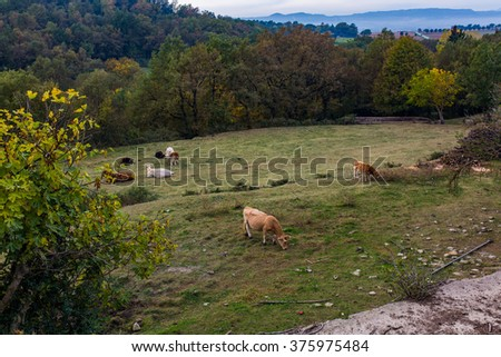 Beautiful nature landscape with vivid colors. cows on pasture - stock photo
