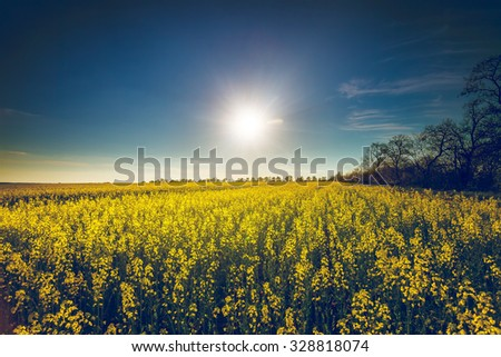 Beautiful nature landscape. yellow Flowers field in Bakota Park, Ukraine